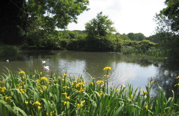 duck pond farm, ryton-on-dunsmore near coventry